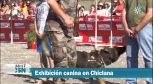 CANINA CHICLANA